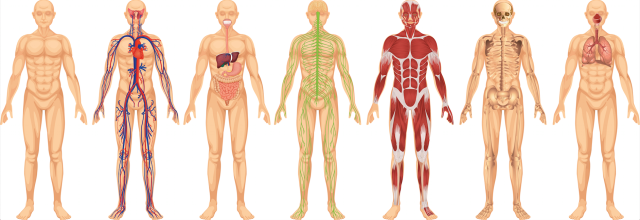 body-systems-2