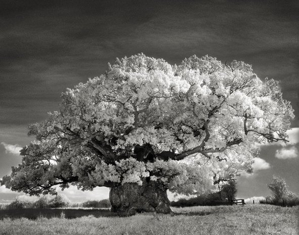 Ancient-Trees-3